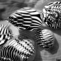 shells in black and white