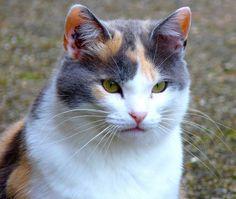 such a beautiful cat