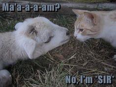 Ma'a-a-a-am? No, I'm *SIR* http://cheezburger.com/9051468032