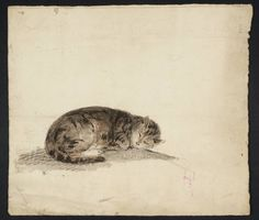 A Sleeping Cat | chalk drawing with watercolour, c.1796-7 | Joseph Mallord William Turner ----- Tate Britain