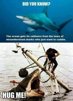 Awww..poor sharks