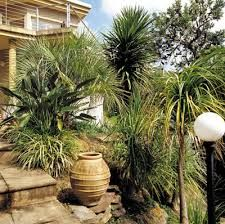 image result for sub tropical garden design ideas