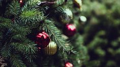How to keep your live #Christmastree fresh plus the best trees in pots. #gardening