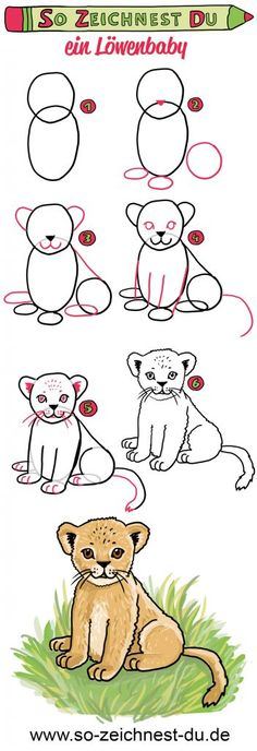 So you draw a lion cub You Draw, Learn To Draw, Hello Kitty Drawing, Flower Mural, Drawing Tutorials For Beginners, Wall Art Crafts, How To Draw Steps, Cool Wall Art, Lion Cub