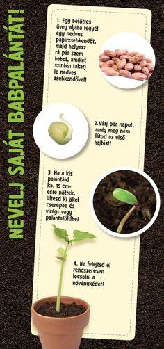 Nevelj saját babpalántát! #TescoMagyarország #kertészet #kert #bab #palanta #novenytermesztes #termesztes #diy Plants, Diy, Birds, Bricolage, Do It Yourself, Plant, Homemade, Diys, Planets