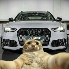 MK. Audi Rs5, Audi A6 Rs, Audi Quattro, Funny Animals, Cute Animals, Sport, Amazing Cars, Cars And Motorcycles, Cute Cats