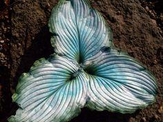 pic- three hosta leaf casting