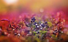 dream garden - Pesquisa Google