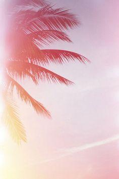 Palm daze.