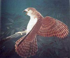 Ten extinct animals that have been rediscovered