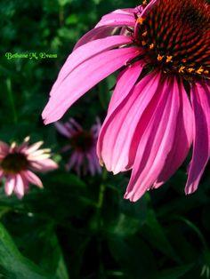 Versatile healing plant