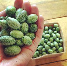 cucamelon~ small like grapes, taste like cucumbers with a touch of lime. Might try to grow these!!