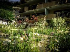 Aquarium, Plants, Garden Planning, Plant, Aquarius, Fish Tank, Planting, Planets