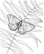 Blue Tailed Damselfly Coloring Page From Category Select 20960 Printable Crafts Of Cartoons Nature Animals Bible And Many More