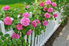 120 Ideen, Wie Sie Ihren Garten Gestalten