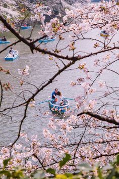Takeshita Street, Change Your Eye Color, Meiji Shrine, Ueno Park, Cherry Blossom Season, Getting Played, Japanese Characters, The Beautiful Country, Flower Market