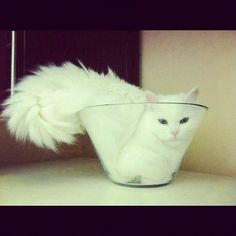 This cat snuggled up in a glass bowl: | If You Instagram Anything, It Better Be Adorable