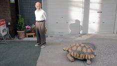 One Man And His Pet Tortoise https://youtu.be/LiMIvKMYzIw via @YouTube