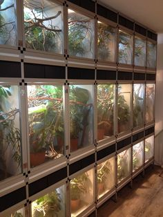 Newest Screen Reptile Terrarium setup Strategies It is obvious of which using a family pet would bring uncounted enjoyment so that you can someone else's life. Reptile Cage, Reptile Store, Reptile House, Reptile Room, Reptile Enclosure, Reptile Tanks, Terrariums, Gecko Terrarium, Terrarium Reptile