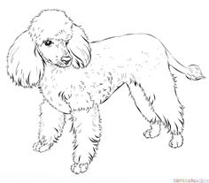 How to draw a french poodle step by step. Drawing tutorials for kids and beginners.