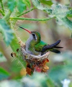 This is really a close-up view!!  Their little nests are sooo tiny & soft inside. A true labor of love from mama hummingbird!!❤️