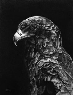 Bateleur Eagle in Ballpoint Pen by ronmonroe on DeviantArt Black Pen Sketches, Art Sketches, Pencil Art Drawings, Animal Drawings, Eagle Wallpaper, Eagle Drawing, Black Paper Drawing, Stippling Art, Scratchboard Art