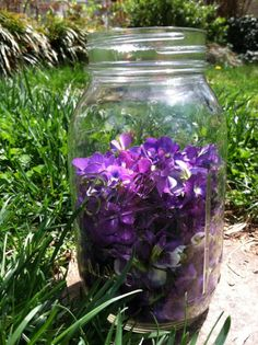 How to Make Violet Cordial