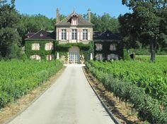 Louis Jadot vineyard...any, all