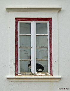 El gato tras la ventana  Algarve Portugal