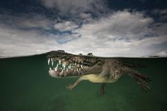 Snappy snaps: underwater shots of eels, sharks and crocs – in pictures | Art and design | The Guardian