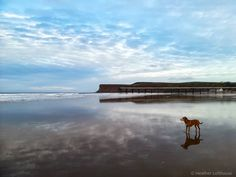 """Heather Freyja Rose on Instagram: """"#saltburn #saltburnbeach #seasidetown #seasidephotography #beachesofinstagram #beachlover #beachphotography #dog #clouds #reflections…"""" Seaside Towns, Beach Photography, Lands End, Clouds, Dogs, Instagram, Pet Dogs, Doggies, Beach Pictures"""