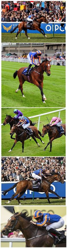 Gleneagles (IRE) 2012 B.c. (Galileo (IRE)-You'resothrilling (USA) by Storm Cat (USA). Full brother to Marvellous. 1st Tyros Stakes G3, Futurity Stakes G2. 2000 Guineas G1. Irish 2000 Guineas G1. St James's Palace Stakes G1. 3rd Prix Jean-Luc Lagardere G1, Trainer A P O'Brien