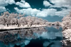 Infrared...i love infrared photos...one day i am going to buy  camera and convert it to only infrared and make a whole series of pics