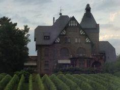 Vineyards - Rhineland, Germany