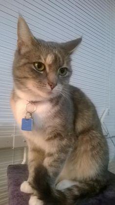 Claudia Cat | Pawshake
