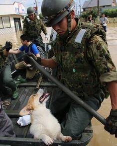 「アイコンタクト」 関東・東北豪雨災害派遣 #陸上自衛隊 #自衛隊 #災害派遣 #救助 #ボート #大雨 #隊員 #犬 #陸自 #jgsdf #jsdf #gsdf Military Weapons, Linkin Park, Self Defense, Dogs And Puppies, Samurai, Army, Jan 20, Pets, My Love