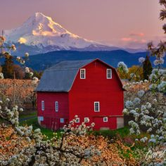 & Hood River, Oregon At blossom time. ~~~ This was this evenings sunset in Hood River. I'm happy to see the blossoms finally coming out. They're looking good in the lower valley but have yet to bloom in the upper valley. Hood River Oregon, Country Barns, Country Living, Country Life, Country Charm, Country Roads, Into The West, Columbia River Gorge, Farm Barn