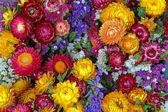 Strawflowers Brighten Up Flower Arrangements