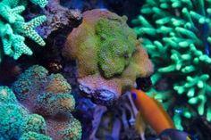 Jūrinis akvariumas Lps, Animals, Animales, Animaux, Animal, Animais