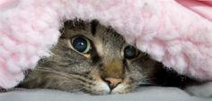 Cuidados com os Pets no inverno! | Blog do CTI Veterinário
