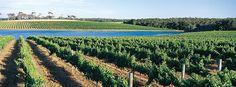 Leeuwin Estate winery ♥