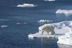 New top story from Time: Christopher Flavelle / BloombergLast Years Global Temperatures Were the Highest Ever Recorded http://time.com/4895913/global-temperatures-climate-change/| Visit http://www.omnipopmag.com/main For More!!! #Omnipop #Omnipopmag