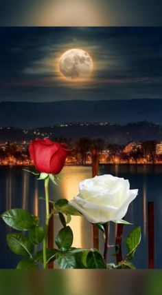 sending my love mum and looking for you in heaven⚘ Lip Wallpaper, Apple Logo Wallpaper Iphone, Beautiful Moon, Beautiful Roses, Love Rose Flower, Roses Gif, Moon Images, Good Night Messages, Night Sights