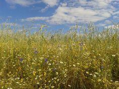 Demeterhof Dunninger, Bavaria, Germany. The farm produces organic grain using biodynamic methods http://www.organicholidays.com/at/3397.htm
