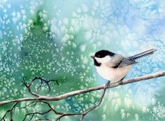 CHICKADEE 8 bird watercolor painting, original painting by artist Barbara Fox   DailyPainters.com