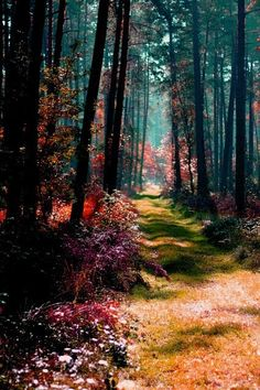 fall enchanted forest