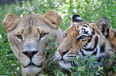 Unlikely animal friends of the Noah's Ark Sanctuary