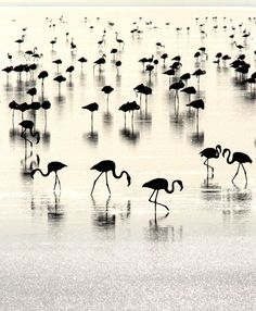 flamingos in silhouette Beautiful Birds, Beautiful World, Beautiful Pictures, Simply Beautiful, Black White Photos, Black And White Photography, Foto Flamingo, Fotografie Portraits, Yin Yang