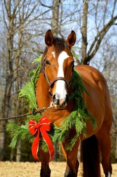 Horse wearing Christmas wreath