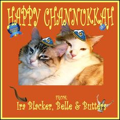 Happy Channukkah Catalog Printing, Cats, Happy, Prints, Movie Posters, Animals, Gatos, Animales, Animaux